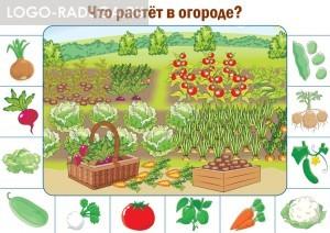 Что растет в огороде