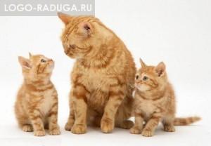 Кот, кошка и котёнок. Кошки, так же, как и собаки, очень давно приручены человеком. Они и сейчас не просто радуют своих хозяев, но и защищают жилище от мышей и других грызунов.